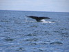 Cool_whale_tail